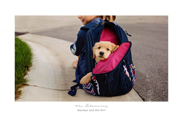 take a puppy to school